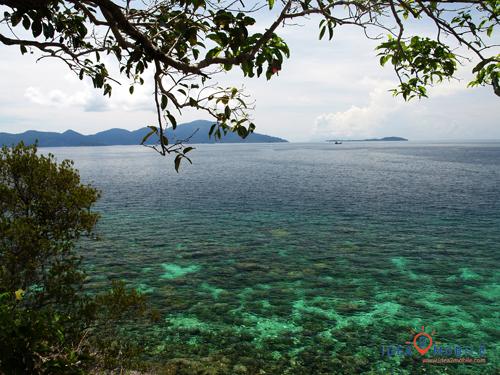 จุดชมวิว เห็นปะการังจากผิวน้ำได้ชัด