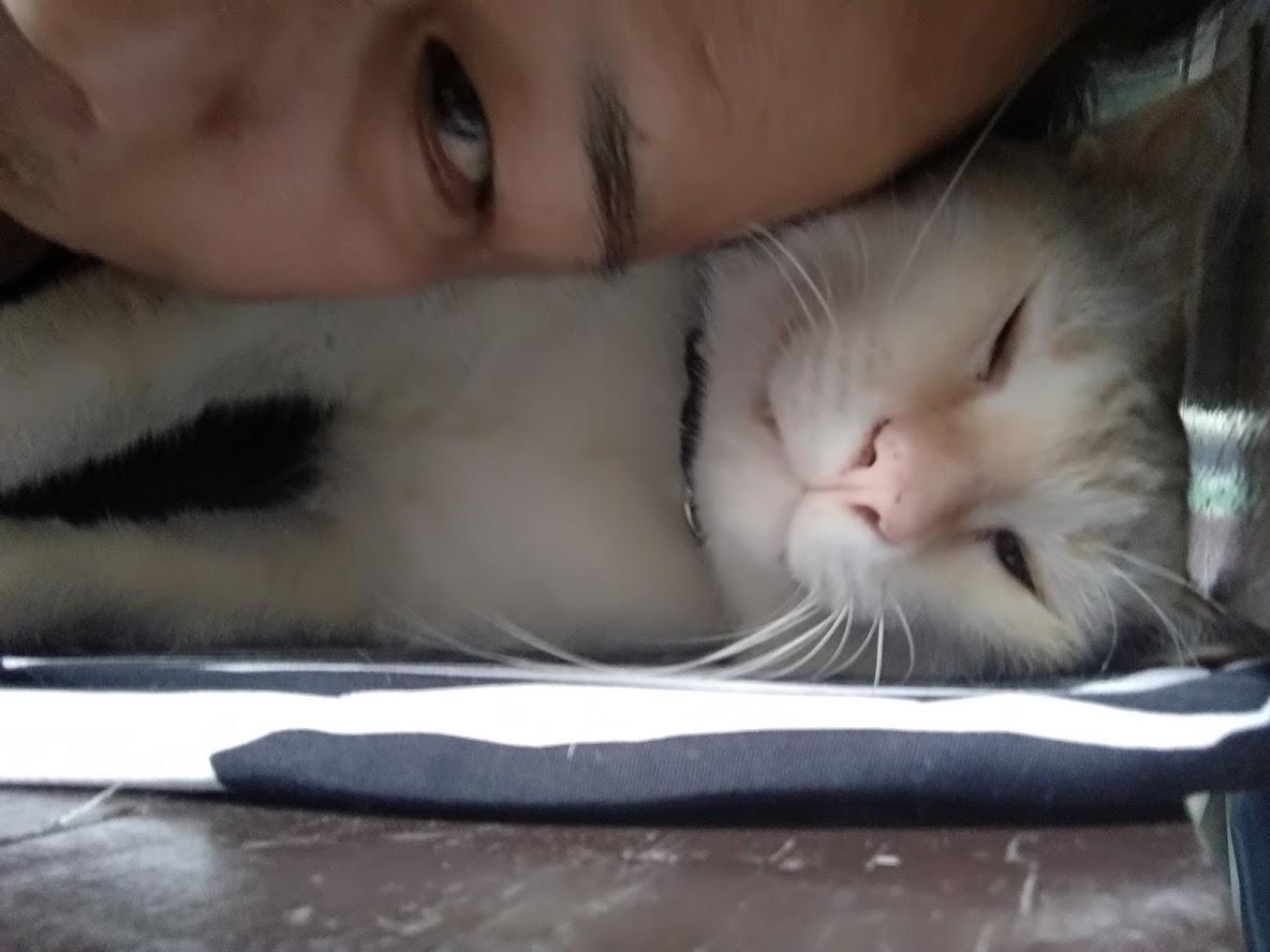 รีดความสุขที่ได้จากแมว